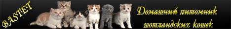 Британские  вислоухие  котята   продажа.