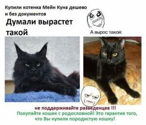 FB_IMG_1427445412010-300x256[1]